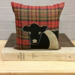 Belted Galloway on Red